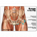 Hip Bursitis Treatments